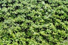Δέντρα καρύδων Στοκ εικόνα με δικαίωμα ελεύθερης χρήσης
