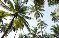 Δέντρα καρύδων στοκ εικόνες