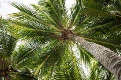 Δέντρα καρύδων Στοκ φωτογραφίες με δικαίωμα ελεύθερης χρήσης