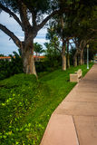 Δέντρα κατά μήκος ενός πεζοδρομίου, στο νησί Lido, στο Newport Beach Στοκ φωτογραφία με δικαίωμα ελεύθερης χρήσης