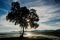 Δέντρα κατά μήκος του άγριου ατόμου στις σκιές όταν έπεφτε ο ήλιος στοκ εικόνα