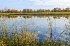 Δέντρα καλάμων λιμνών φθινοπώρου, πράσινη χλόη Στοκ φωτογραφία με δικαίωμα ελεύθερης χρήσης