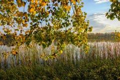 Δέντρα καλάμων λιμνών φθινοπώρου, πράσινη χλόη Στοκ Εικόνα