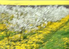 Δέντρα κερασιών στο άνθος, οπωρώνας κερασιών την άνοιξη, λουλούδια dande Στοκ φωτογραφίες με δικαίωμα ελεύθερης χρήσης