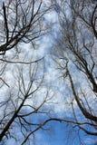 δέντρα κλάδων στοκ εικόνες