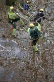 δέντρα κλαδεύματος Στοκ Εικόνα