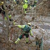 δέντρα κλαδεύματος Στοκ εικόνες με δικαίωμα ελεύθερης χρήσης