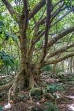 Δέντρα 3 κοιλάδων Iao Στοκ φωτογραφία με δικαίωμα ελεύθερης χρήσης