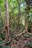 Δέντρα κοιλάδων Iao Στοκ φωτογραφίες με δικαίωμα ελεύθερης χρήσης