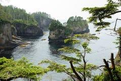 δέντρα κολακείας ακρωτη Στοκ εικόνες με δικαίωμα ελεύθερης χρήσης