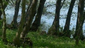 Δέντρα κοντά στη λίμνη απόθεμα βίντεο