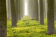 Δέντρα κορμών στην ομίχλη Στοκ Εικόνα