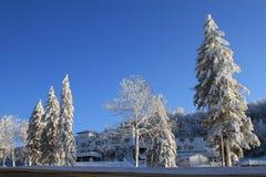 δέντρα κορυφών χιονιού βο&up Στοκ Φωτογραφίες