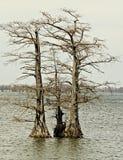 Δέντρα κυπαρισσιών στη λίμνη Reelfoot, Τένεσι Στοκ φωτογραφία με δικαίωμα ελεύθερης χρήσης