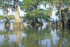 Δέντρα κυπαρισσιών στο Bayou, κρατικό πάρκο Fausse Pointe λιμνών, Λουιζιάνα στοκ φωτογραφία