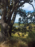δέντρα κύκνων ζευγαριού λ& Στοκ εικόνες με δικαίωμα ελεύθερης χρήσης
