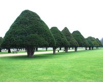 δέντρα κώνων Στοκ εικόνα με δικαίωμα ελεύθερης χρήσης