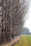 Δέντρα λευκών στην επαρχία σειρών Στοκ εικόνα με δικαίωμα ελεύθερης χρήσης