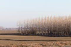 Δέντρα λευκών στην επαρχία σειρών Στοκ φωτογραφία με δικαίωμα ελεύθερης χρήσης