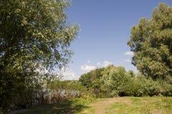 Δέντρα λευκών στο λιβάδι Πράσινος, καλοκαίρι Στοκ εικόνα με δικαίωμα ελεύθερης χρήσης
