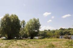 Δέντρα λευκών στο λιβάδι Πράσινος, καλοκαίρι Στοκ φωτογραφία με δικαίωμα ελεύθερης χρήσης