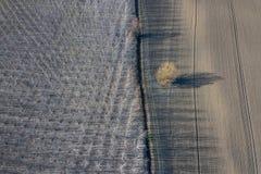 Δέντρα λευκών την πρώιμη άνοιξη επαρχίας σειρών Τοπ όψη Στοκ φωτογραφία με δικαίωμα ελεύθερης χρήσης