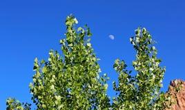 Δέντρα λευκών του παρατηρητή Campground, Zion Στοκ φωτογραφίες με δικαίωμα ελεύθερης χρήσης