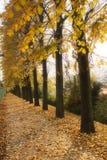 δέντρα λεωφόρων στοκ φωτογραφίες