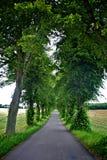δέντρα λεωφόρων στοκ φωτογραφία με δικαίωμα ελεύθερης χρήσης
