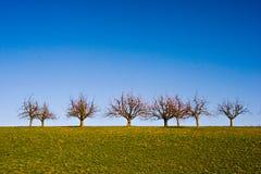 δέντρα λιβαδιών Στοκ Εικόνες