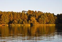 δέντρα λιμνών Στοκ φωτογραφία με δικαίωμα ελεύθερης χρήσης