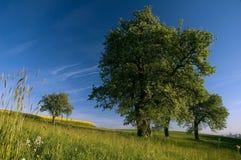 δέντρα λόφων πόλεων στοκ εικόνα