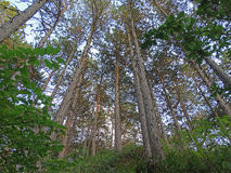 Δέντρα μέχρι τον ουρανό Στοκ φωτογραφία με δικαίωμα ελεύθερης χρήσης