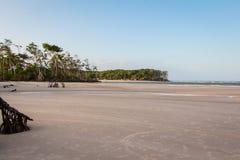 Δέντρα μαγγροβίων Στοκ φωτογραφία με δικαίωμα ελεύθερης χρήσης