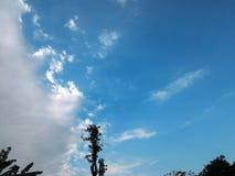 Δέντρα μεταξύ του σαφούς ουρανού Στοκ φωτογραφία με δικαίωμα ελεύθερης χρήσης