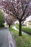 Δέντρα με τα ρόδινα λουλούδια κατά μήκος Naviglio Pavese στοκ εικόνες με δικαίωμα ελεύθερης χρήσης