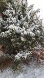 Δέντρα με τα χιόνια Στοκ Φωτογραφίες