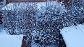 Δέντρα με τα χιόνια Στοκ Εικόνες