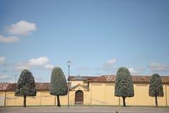 Δέντρα με τη μορφή κορωνών υπό μορφή στρογγυλευμένου κώνου Στοκ Φωτογραφία