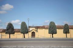 Δέντρα με τη μορφή κορωνών υπό μορφή στρογγυλευμένου κώνου Στοκ φωτογραφίες με δικαίωμα ελεύθερης χρήσης
