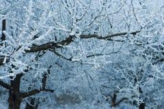 Δέντρα με τους παγωμένους κλάδους Στοκ Φωτογραφίες