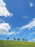 Δέντρα με το μπλε ουρανό (18) Στοκ Φωτογραφίες