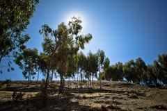 Δέντρα με το πίσω μέρος ligh του ήλιου Ταξίδι δρόμων και βαρκών στη Isla del Sol, Στοκ Εικόνα