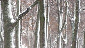 Δέντρα με το χιόνι στο χειμερινό πάρκο απόθεμα βίντεο