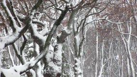 Δέντρα με το χιόνι στο χειμερινό πάρκο φιλμ μικρού μήκους