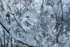 Δέντρα με το χιόνι Στοκ φωτογραφία με δικαίωμα ελεύθερης χρήσης