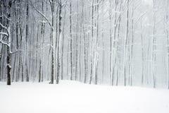 Δέντρα με το χιόνι Στοκ Φωτογραφίες