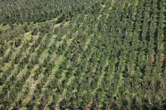 δέντρα μηλιάς Στοκ Φωτογραφίες
