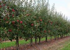 δέντρα μηλιάς Στοκ φωτογραφίες με δικαίωμα ελεύθερης χρήσης