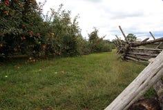 Δέντρα μηλιών στον τομέα με το φράκτη Στοκ Εικόνες